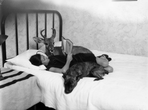 Frida In Bed With Dog Photo